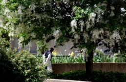 Monk walking alone in garden