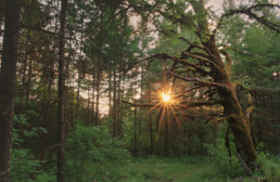 sunset through woods