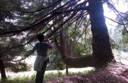 Redwoods Virtual Retreat, woman taking picture of redwoods tree